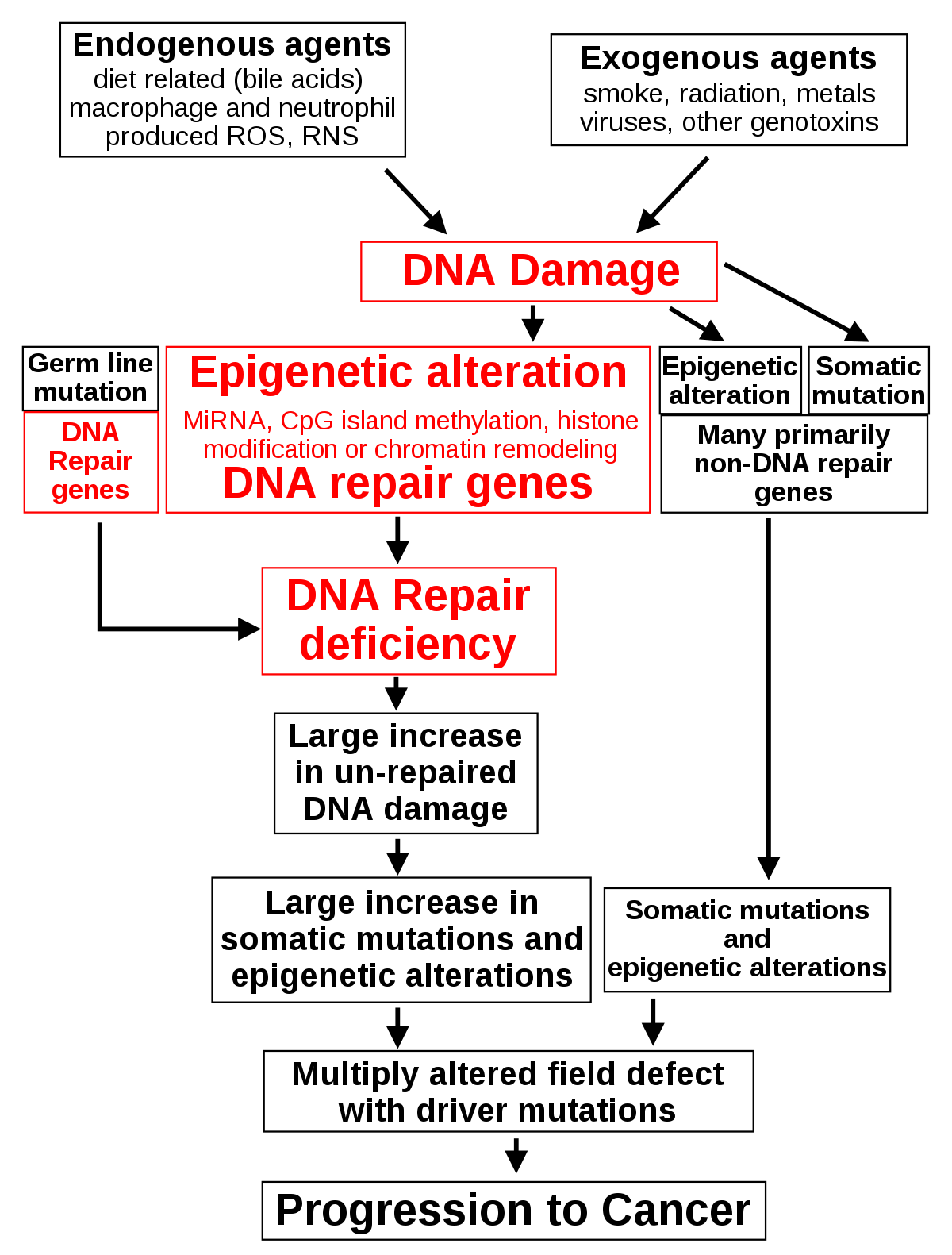 kriodestrukció a genitális szemölcsöknél fordított condyloma