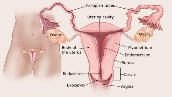 az endometrium rák genetikai