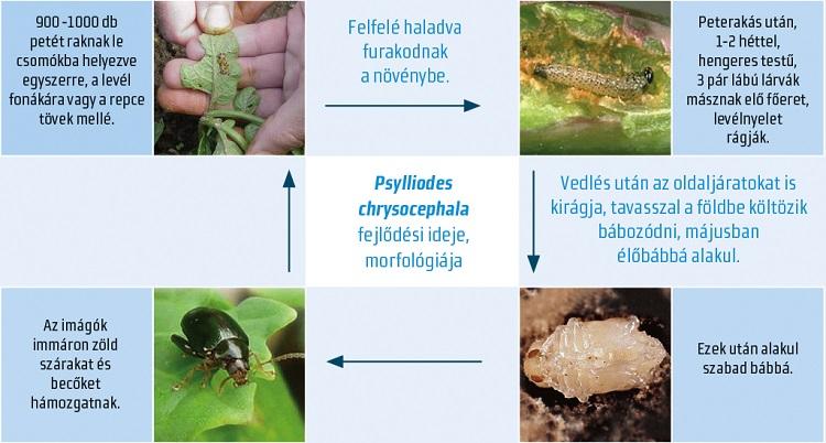 paraziták következtetésként