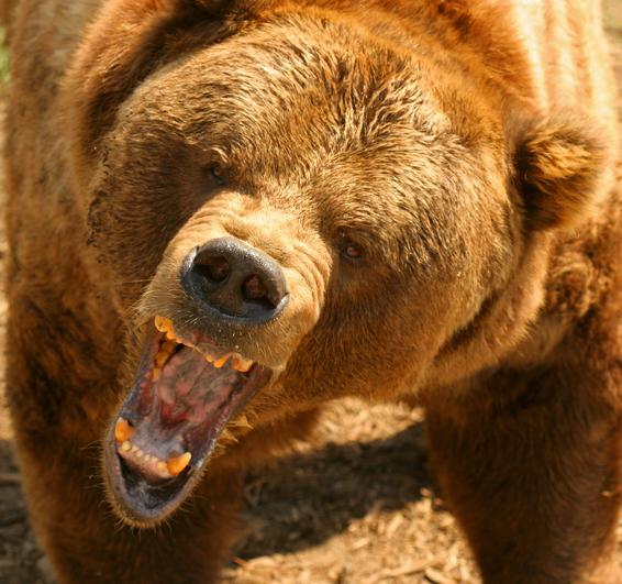 hpv vírus medve)