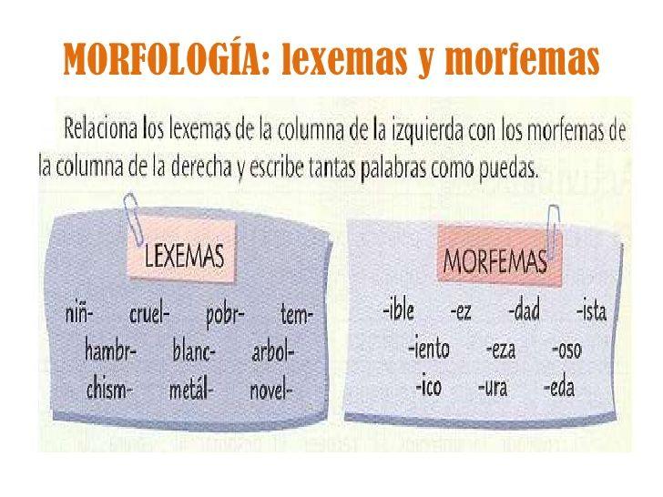 bika morfológia)