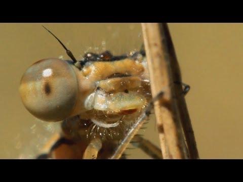 mikro makro paraziták