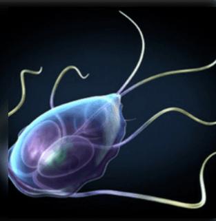 condyloma vezikulák