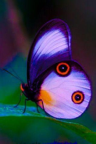 papilloma transzfer)