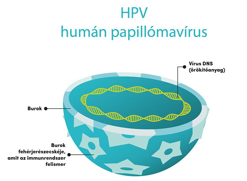 emberi papillomavírus fertőzés károsodása