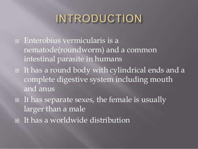enterobius vermicularis slideshare