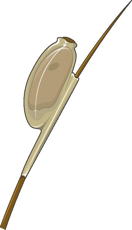 giardia ag scaun küldetés)