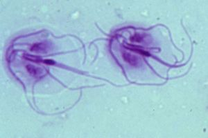 giardia bakterie bij honden)