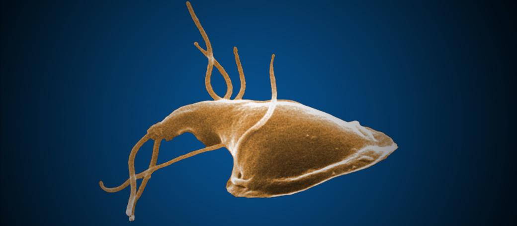 emberi papilloma a nők kezelésében a geo gyöngyök elterjedtsége