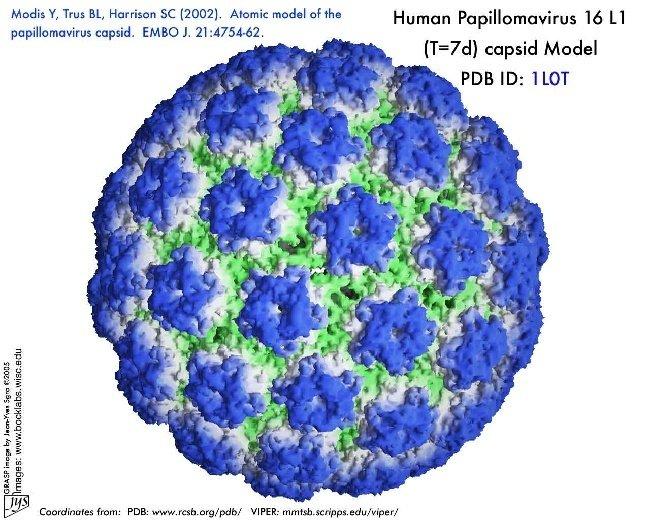 HPV-szűrés és tipizálás - bestgumi.hu