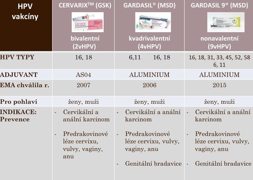hpv vírus muzi lecba)