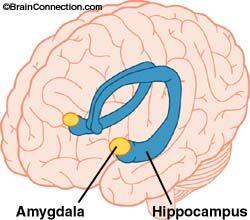 papillomavírus hím amygdala hpv genitális szemölcsök férfi kezelése