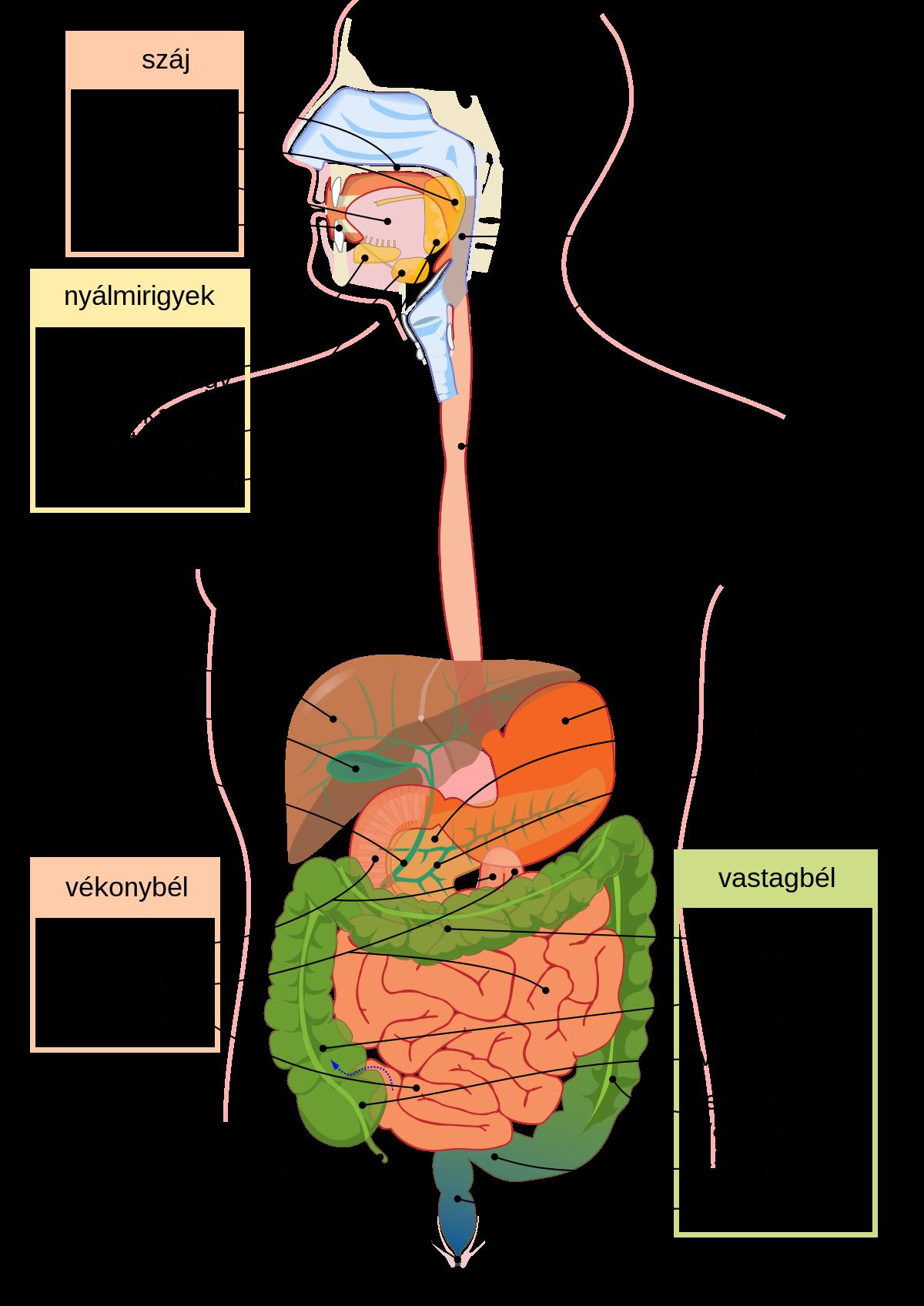 parazita platyhelminták példája)