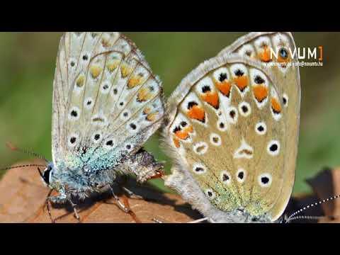 parazita tabletták pillangók számára