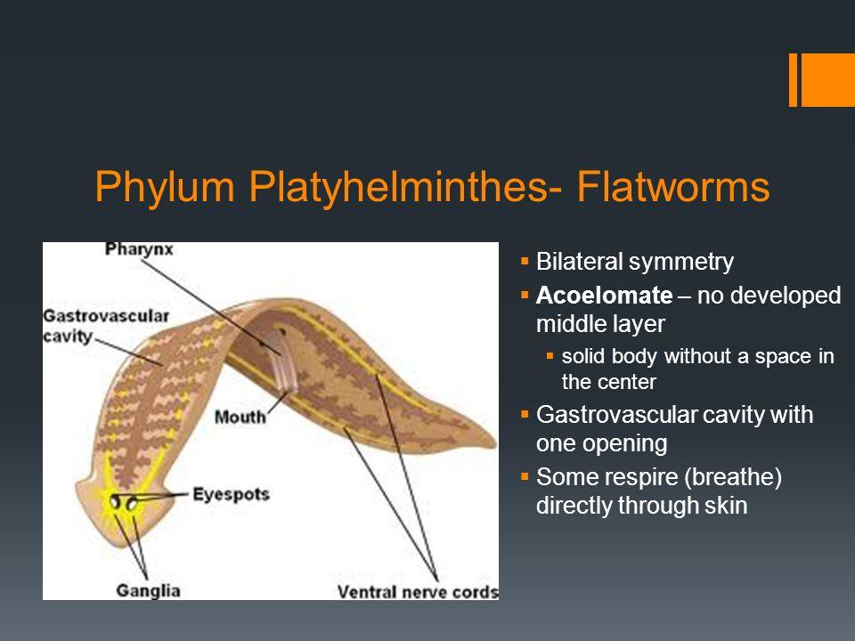 Perbedaan platyhelminthes nematoda annelida