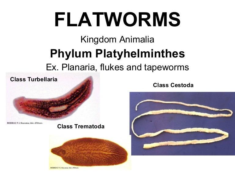 szöveti paraziták