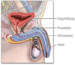 hpv gebarmutterhals op emberi papillómák
