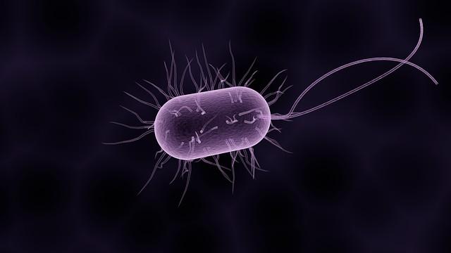rossz baktériumok)