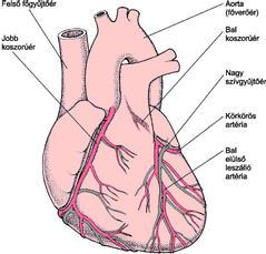 szívbetegség gyógyszere lenne