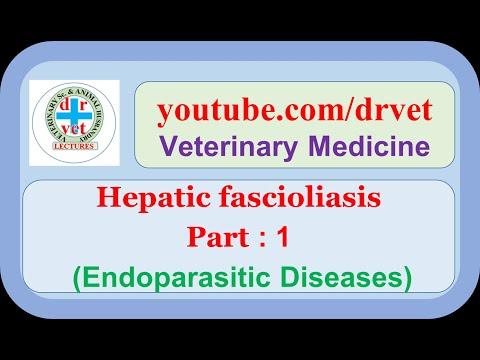 Dr. Leitold Ferenc honlapja