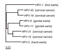 vírus hpv tuyp 16)