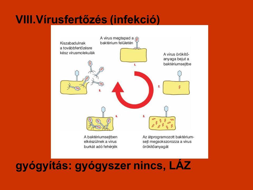 vírusfertőzés)