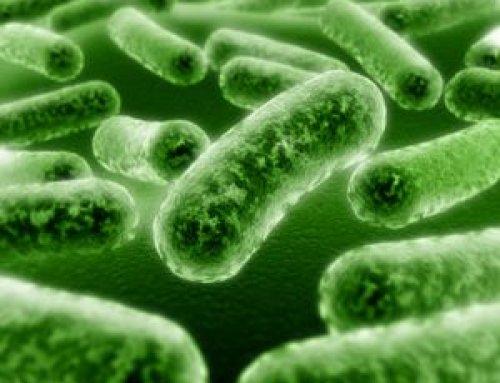rossz baktériumok az emberi parazita elleni védekezés