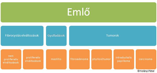 Az emlőmirigy intraductalis papilloma - Fibroma October