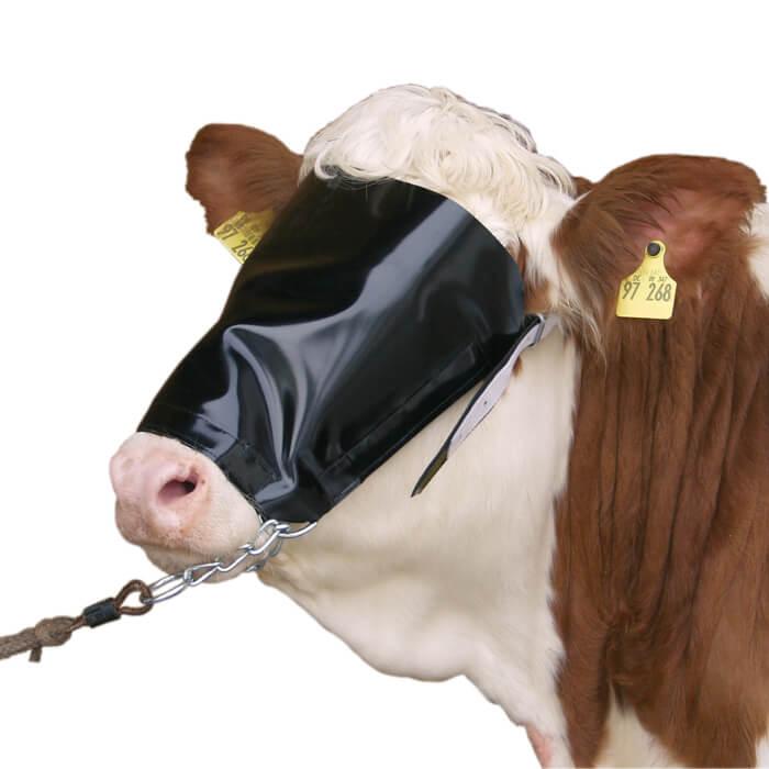 Fascioliasis tojás. Hogyan gyógyíthatjuk szarvasmarhákat fascioliasissal?