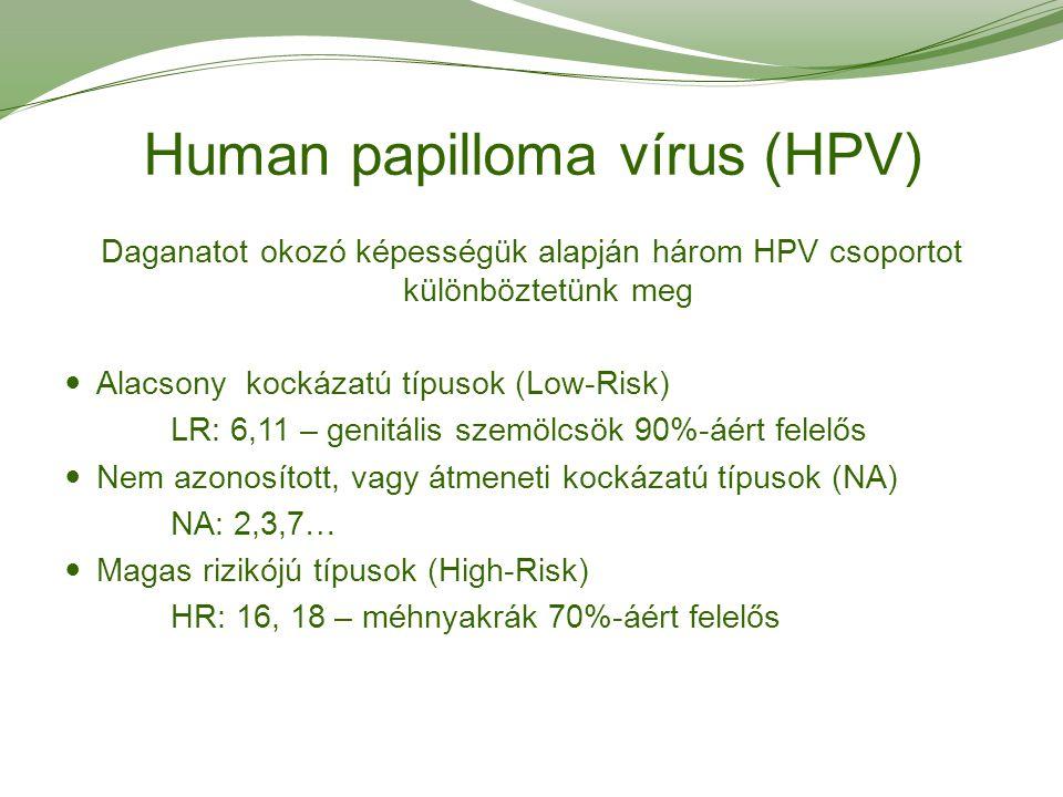 hpv magas kockázatú típus 16