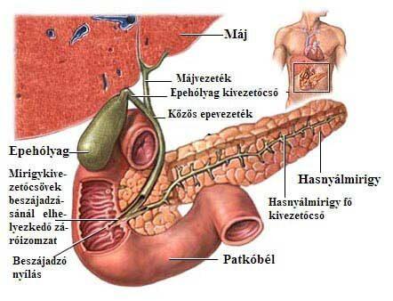 epehólyag paraziták kezelése