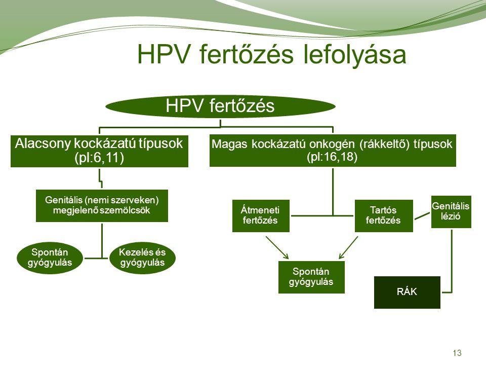 hpv magas kockázatú típus 16)