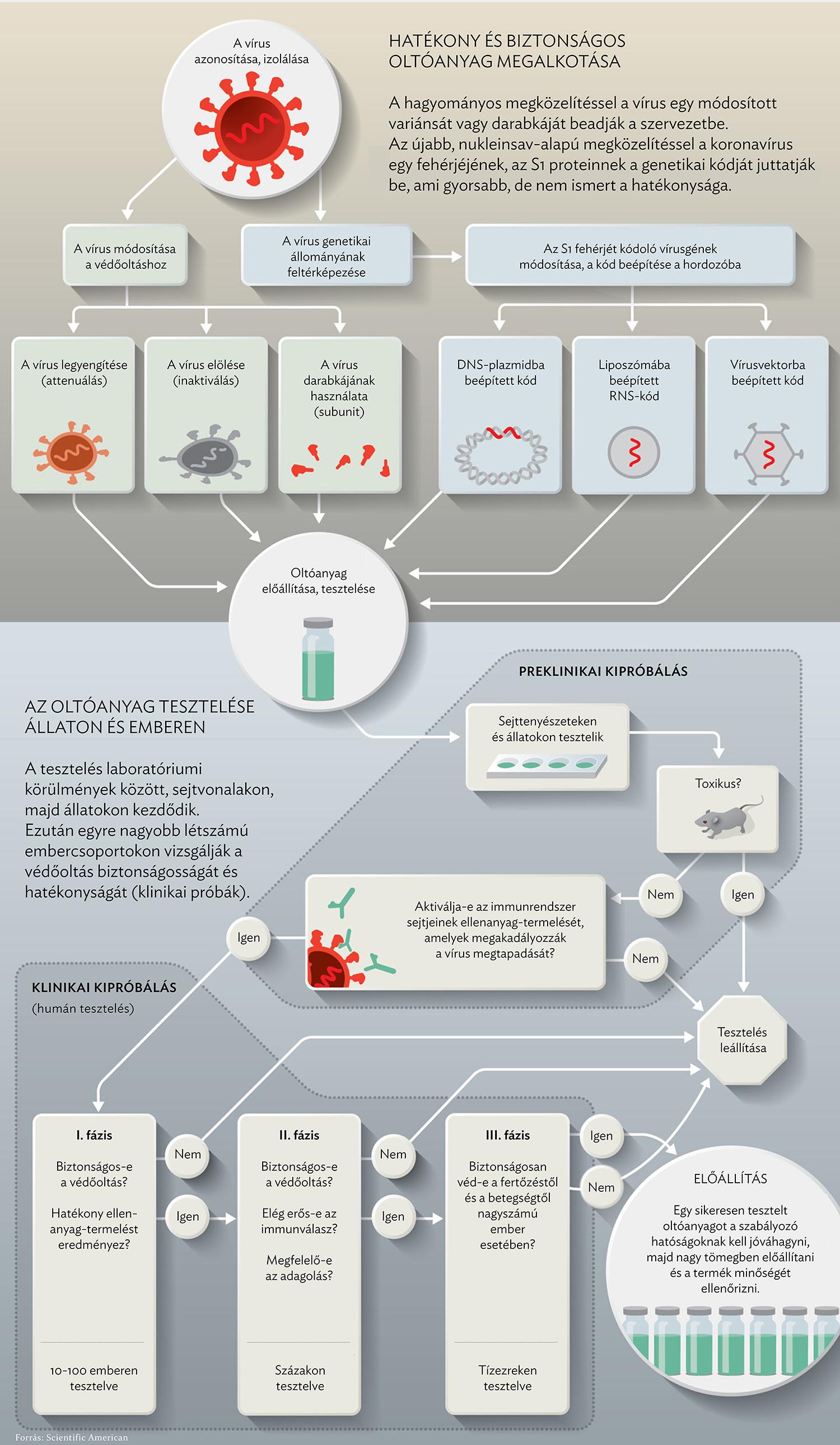 humán papillomavírus vakcina antitestek