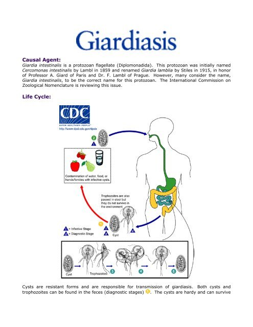 Giardia yard cleaning. Helminth kép ,giardiasis bőrszín